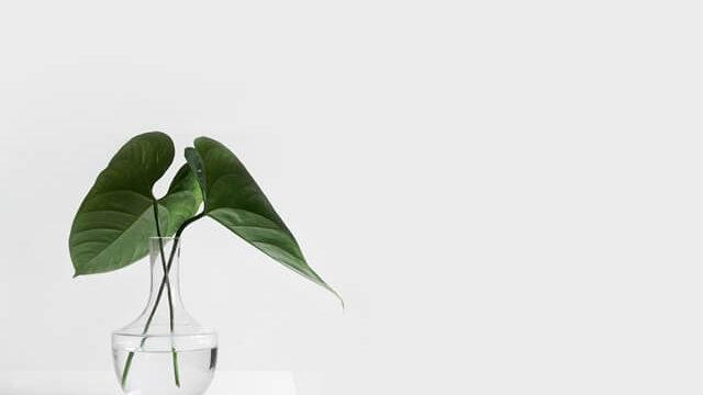 時代遅れを象徴した植物の画像