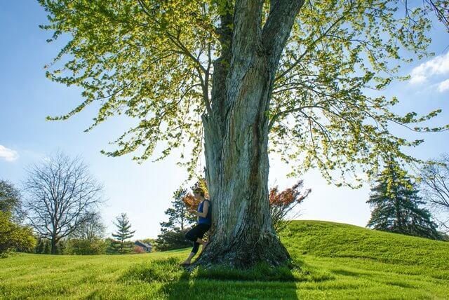 輝くのツリーの画像