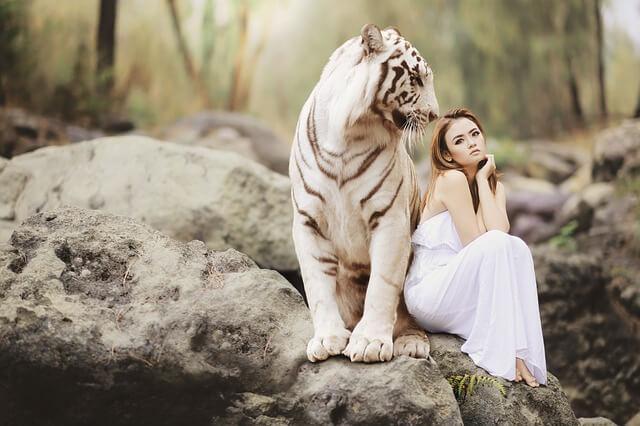 女性とホワイトタイガー